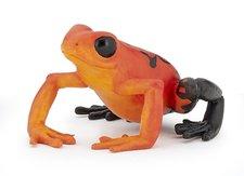 Žába červená